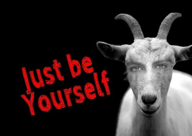 goat-1148038_1920